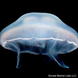 jellyfish-0412 copy 2.jpg